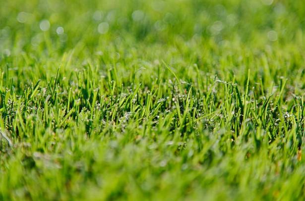 pelouse-jardin-herbe