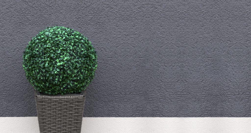Mur extérieur blanc et gris avec un buisson décoratif